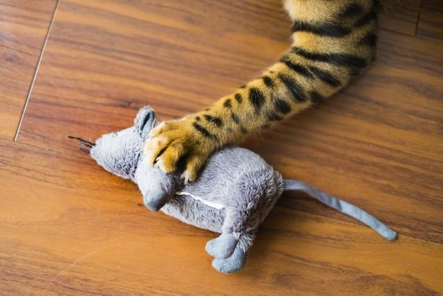 猫を人間が飼うようになったのは、もともとネズミを捕らせるためで重宝されたといわれています。