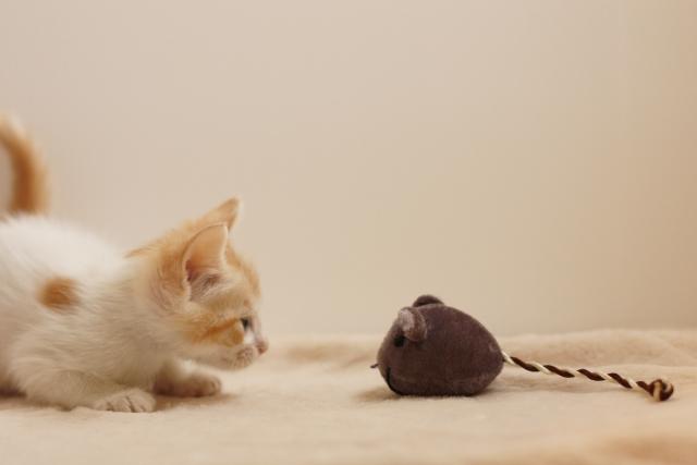 ネズミを捕ったあとは何をするか