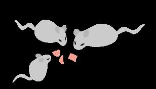 殺鼠剤の効果の上げ方