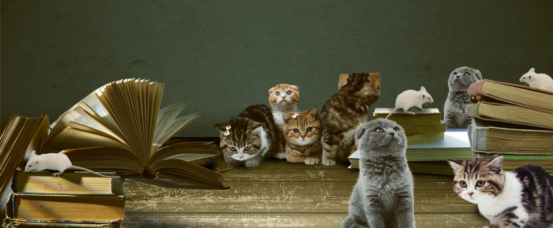 猫を飼えばネズミはいなくなるか?ネズミ対策として猫は有能か