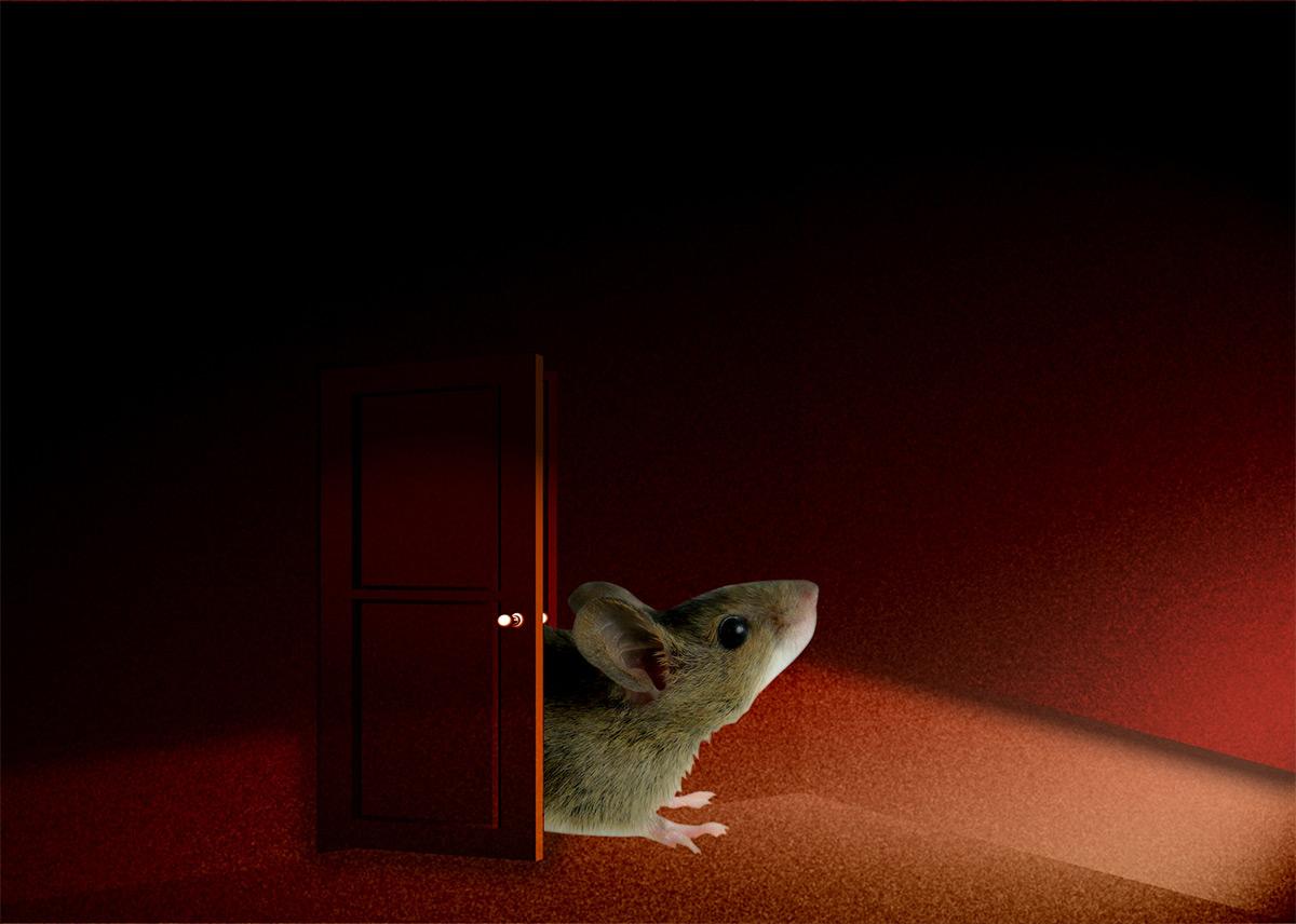 ネズミを放置してはいけない理由とは?ネズミの恐怖と危険性について