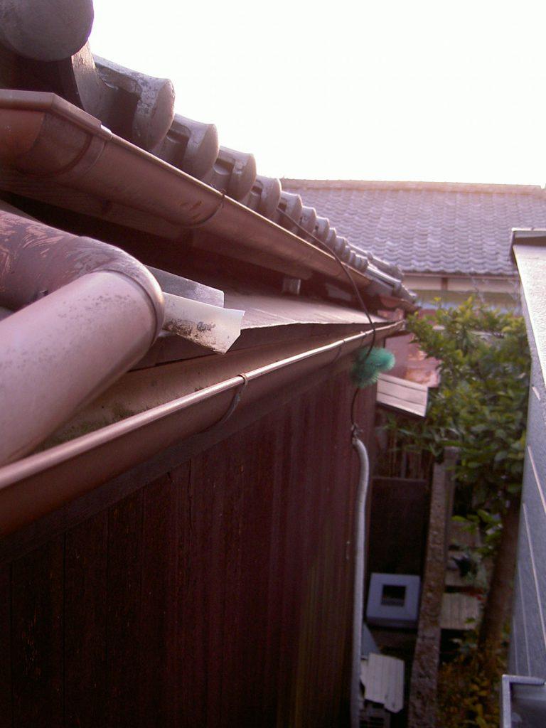 ネズミ 屋根