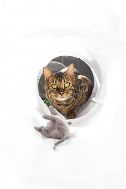 ネズミ駆除でネコに住んでもらう