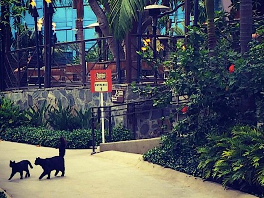 ディズニーランドの野良猫