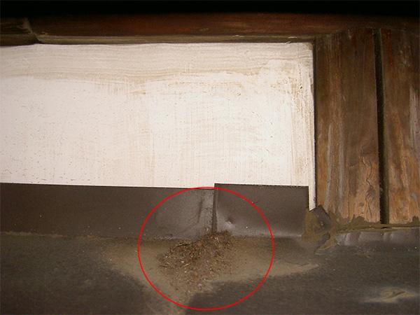場所は屋根、糞と毛のラットサイン
