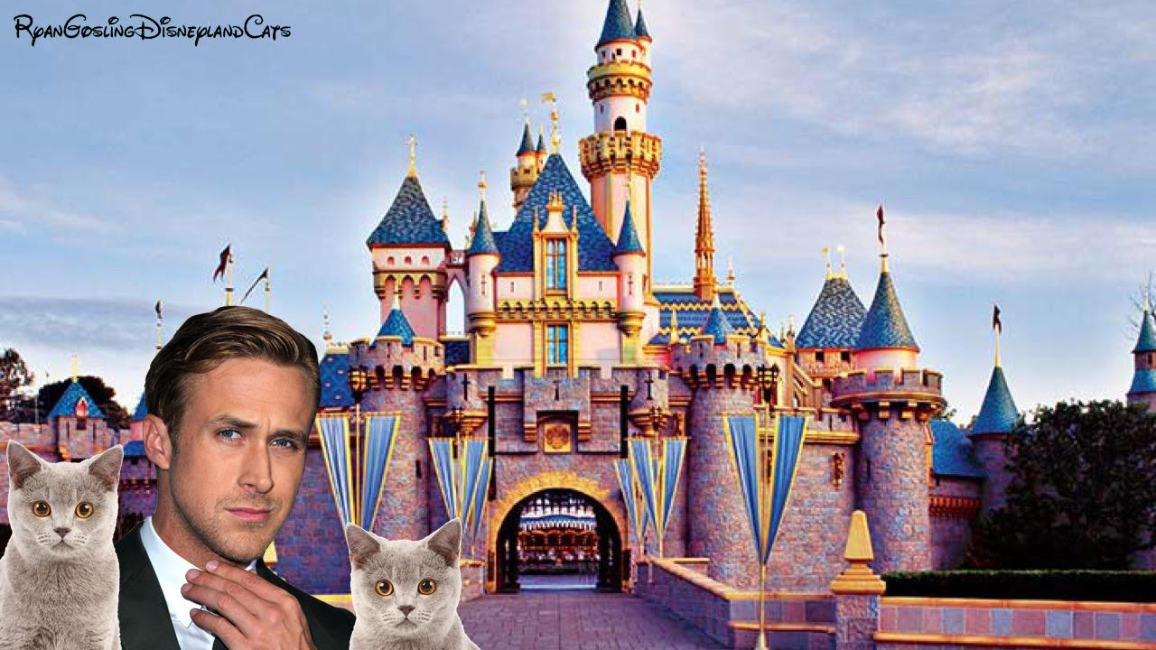 ディズニーランドにたくさんの野良猫が住んでいる理由