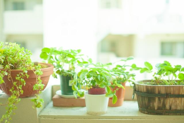 留守中は植物に水やりができないので、水を受け皿に張って出かけるケースもあるかと思います。