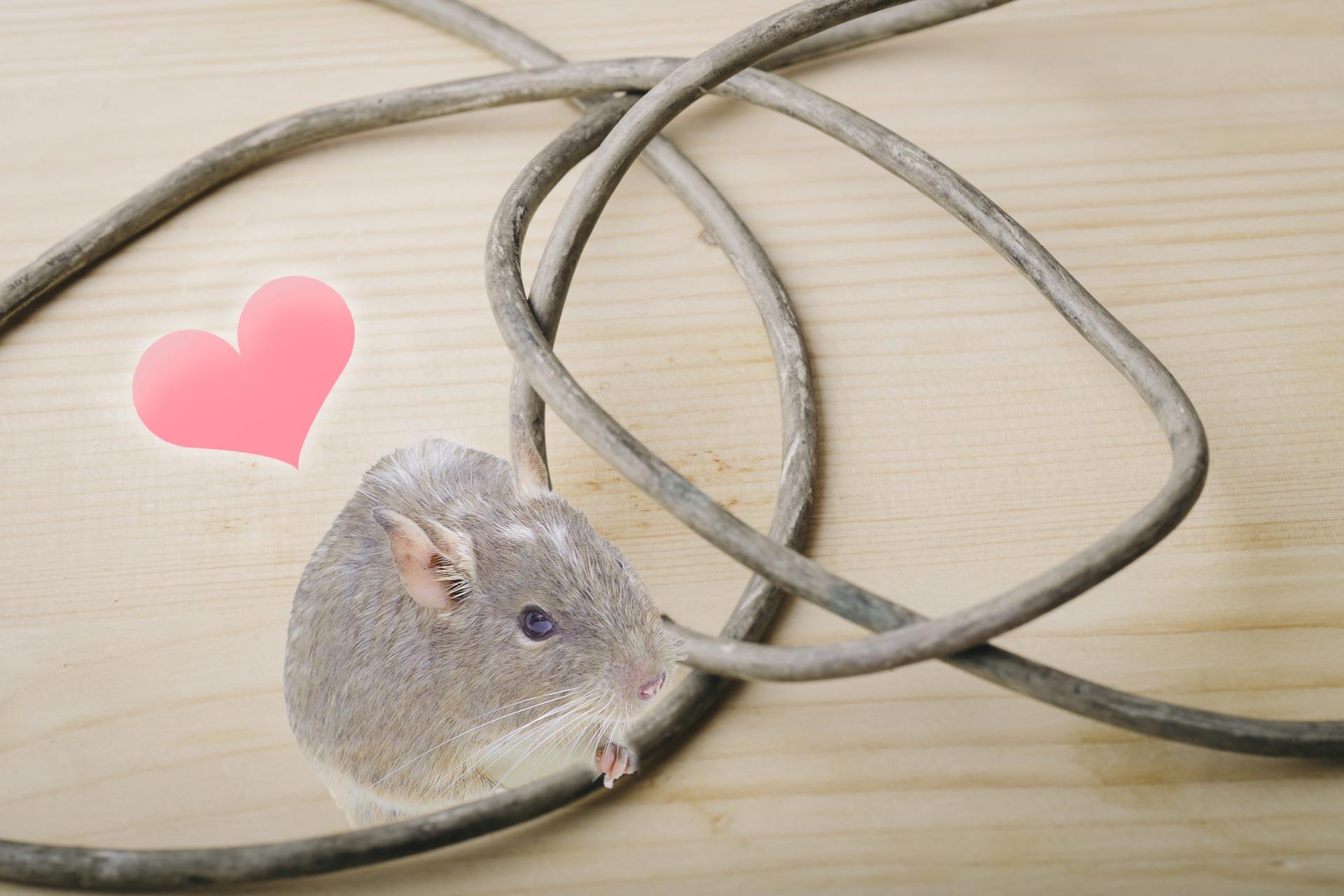 ネズミは電線がお好き