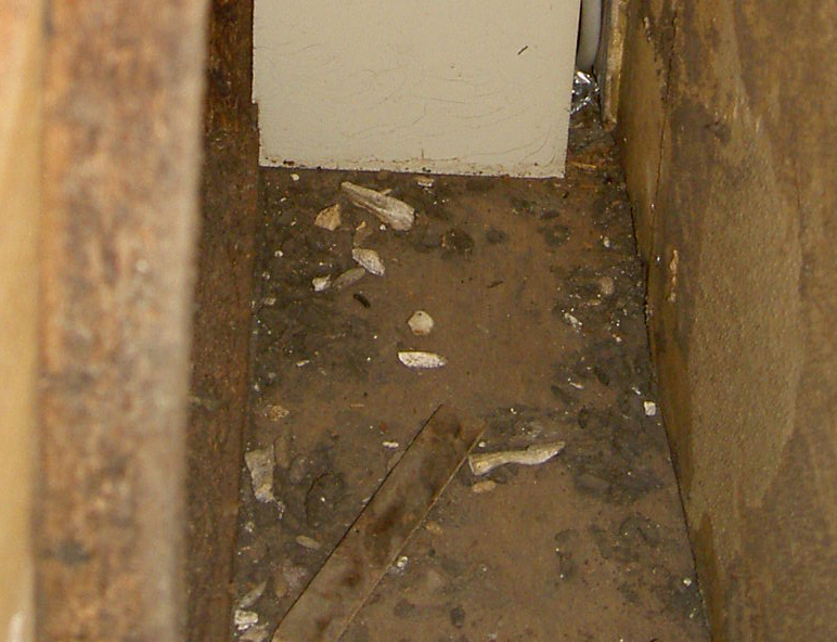 ネズミの糞尿は駆除の手がかり