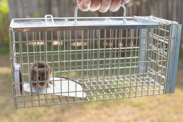 ネズミがもたらす感染症 まとめ