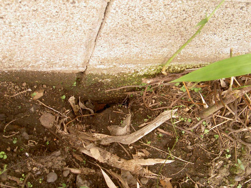 隣の家から掘られていたネズミの侵入口