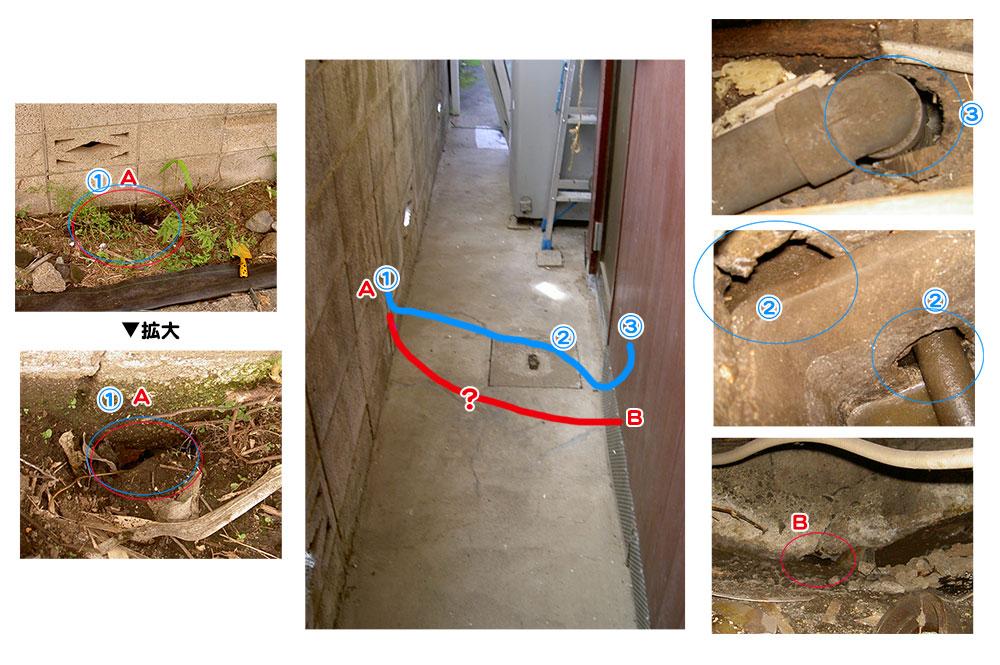 隣家の敷地から続くネズミのトンネルを発見!