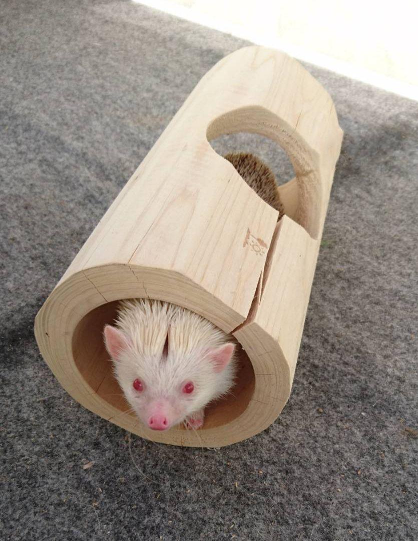 ネズミの習性を利用した『筒型の罠』
