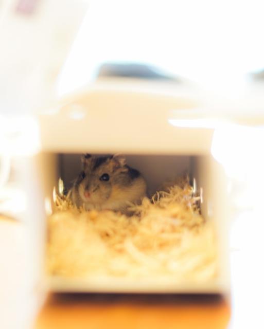ネズミが巣作りしやすい環境