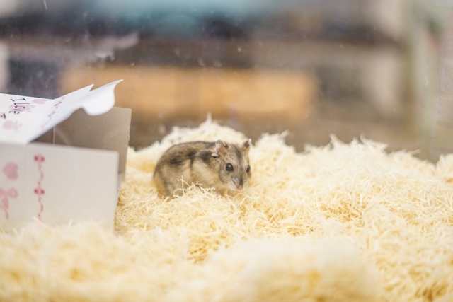 ネズミの巣作りに使う巣材を置かない