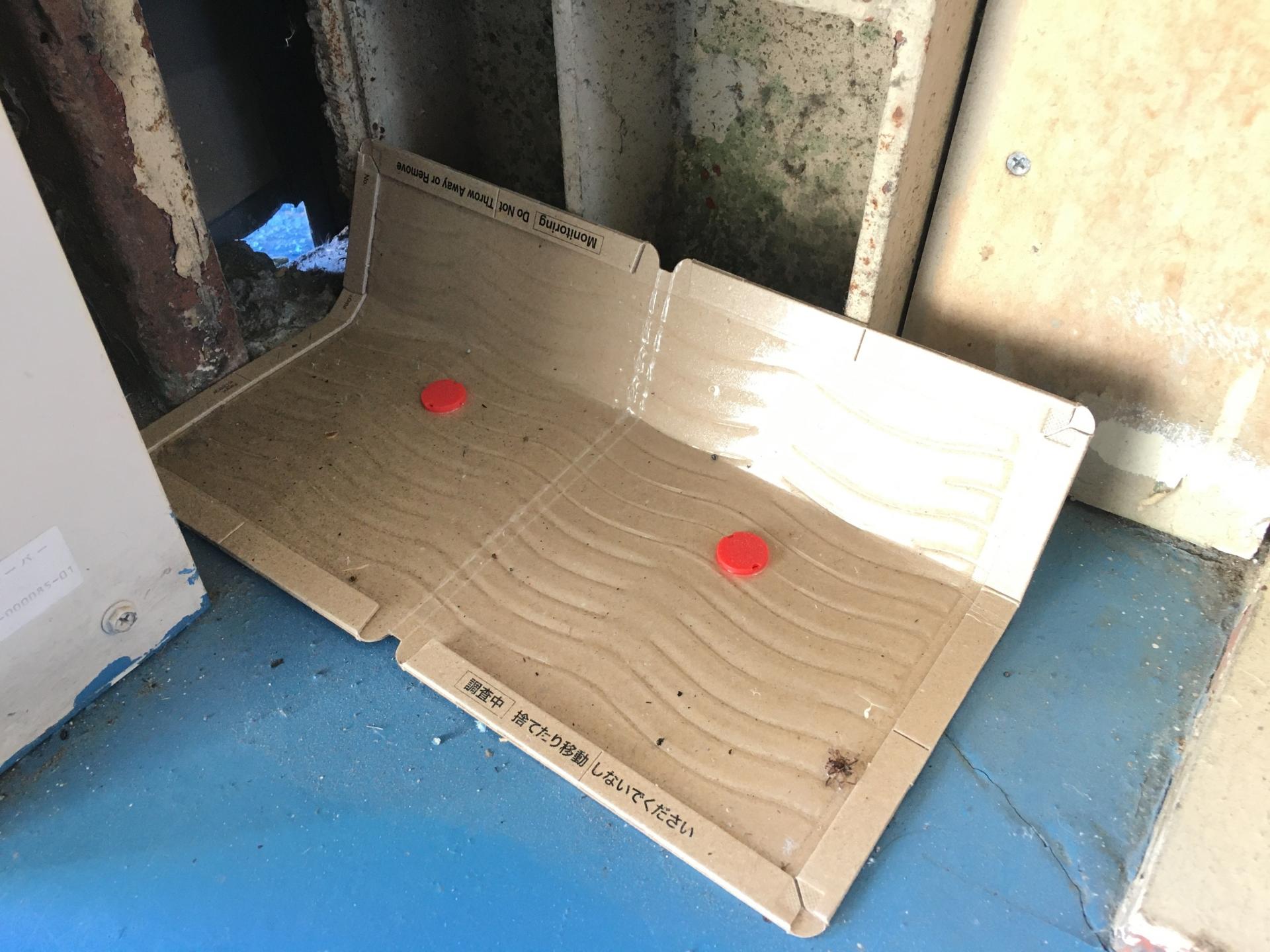 ネズミ駆除用「粘着シート式罠」の選び方